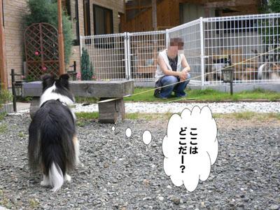 犬のみせ藤田さん1