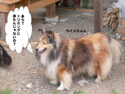 犬のみせ藤田さん5