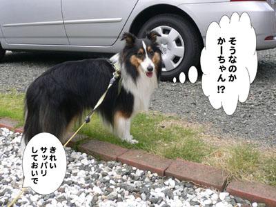 犬のみせ藤田さん6