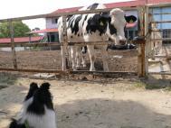 淡路島牧場2007
