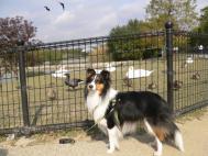 昆陽池公園2007