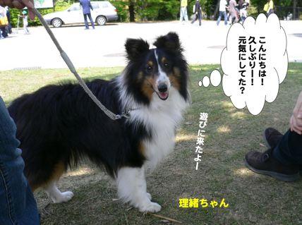 理緒ちゃん2