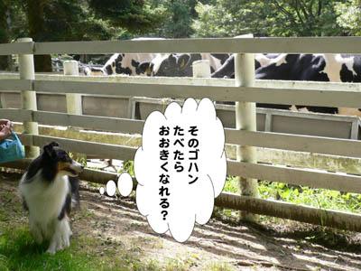 六甲山牧場10