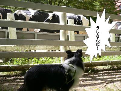 六甲山牧場8