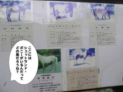 六甲山牧場21