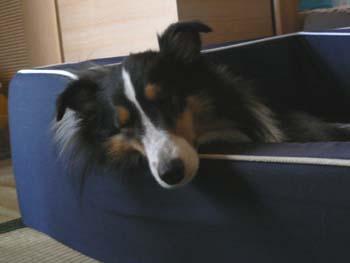 ベッドでアゴ枕3