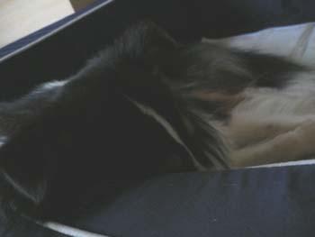 ベッドでアゴ枕4