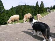 六甲山牧場2009