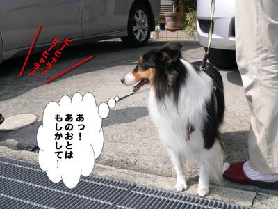 獅子舞2009-1