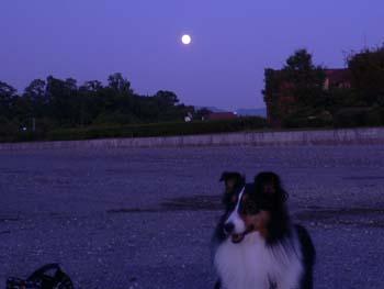 中秋の名月の翌日4
