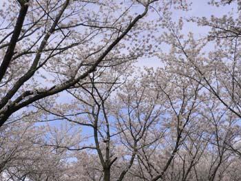 8お花見10日紹介編