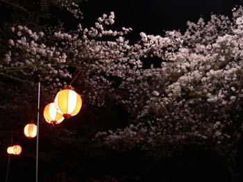 6夜桜は難しい