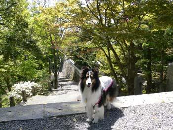 11播州清水寺
