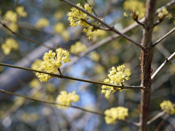 05四季の庭の花_edited-2