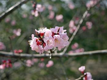 15四季の庭の花_edited-2