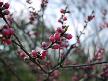 16四季の庭の花_edited-2