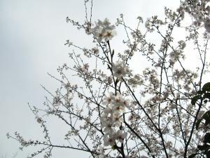 しょうぶ園 022_1