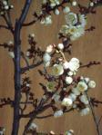 H230210五分咲きの梅