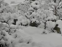 H230215春の大雪