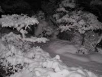 H230214夜半の雪