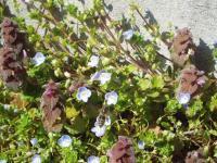 H230305ミツバチ飛ぶ春の日