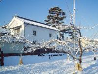H230309雪の大松
