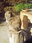 H230319ガラパゴス猫