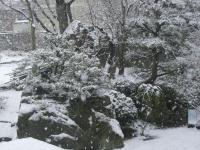 H240328雪降る