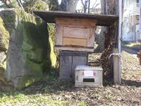 H240329ミツバチ巣箱倒壊寸前