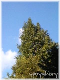 この木、なんて木だろ?