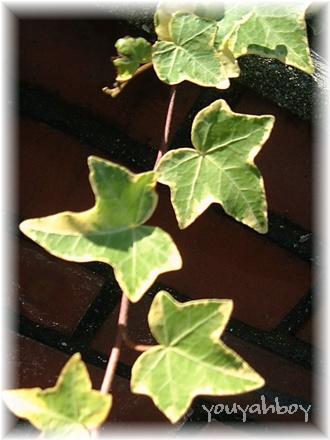 かわいい、かわいい、葉っぱちゃん