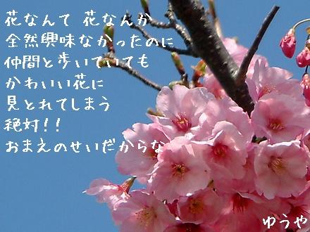 【花なんて】クリックするとタテ型写真詩になります!