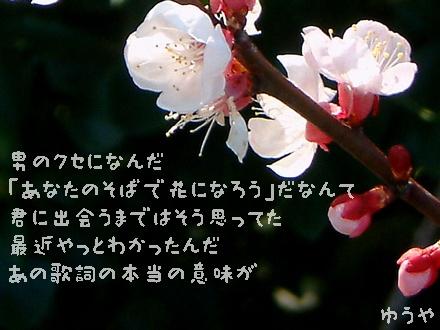 【花詞 ―hanakotoba―】クリックするとタテ型写真詩になります!