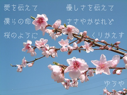 【桜のように】クリックするとタテ型写真詩になります!