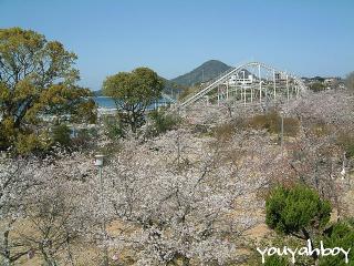桜の海で泳ぎたい