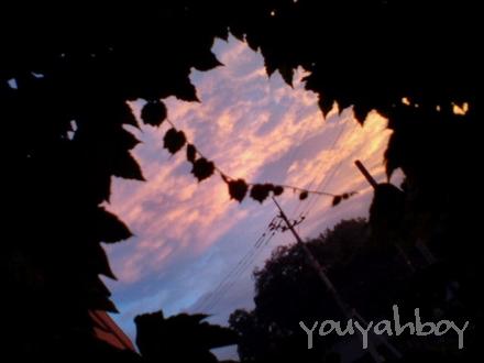 夕焼け雲とツタの葉