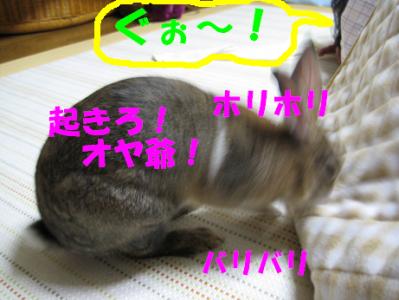 IMG_B4423