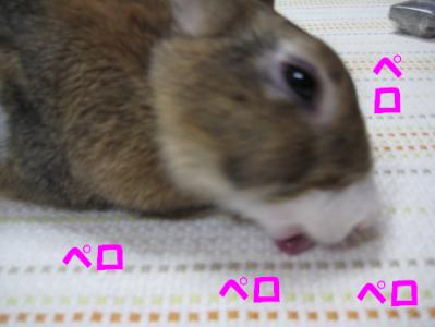 IMG_こ4580
