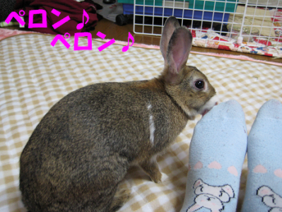 IMG_靴下5193