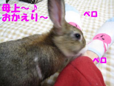 IMG_靴下5240