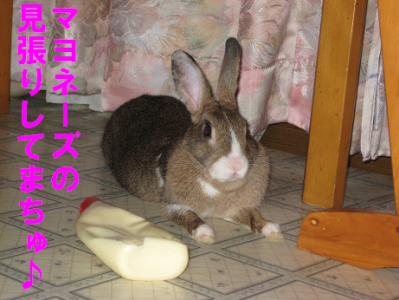 IMG_マヨ5393