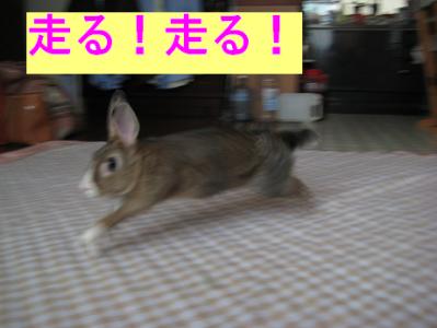 IMG_走る0066