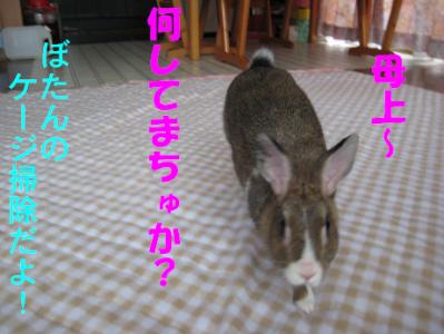IMG_走る0067