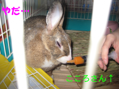 IMG_シリンジ0343