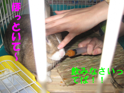 IMG_飲め~0346