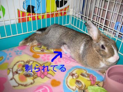IMG_はげ0351