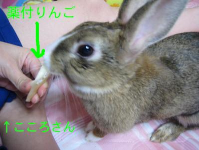 IMG_くすり0377