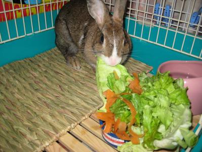 IMG_野菜0380