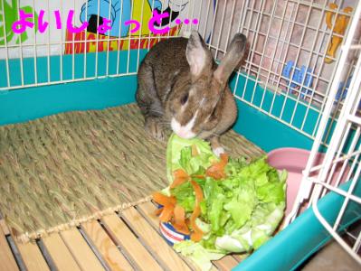 IMG_野菜0379
