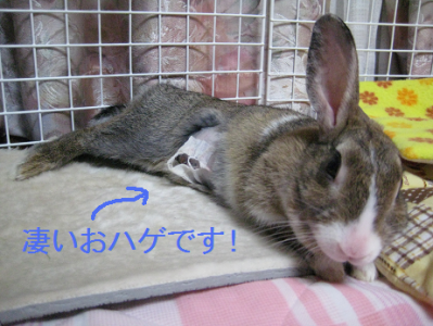 IMG_はげ0441